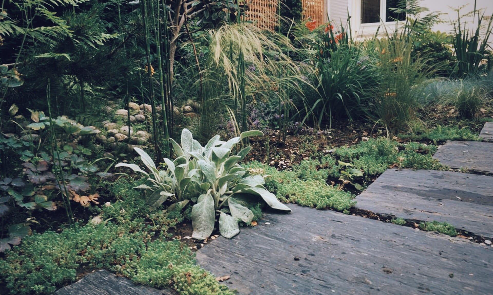 04_Nordscape_chemin-de-shiste-jardin-de-vivace