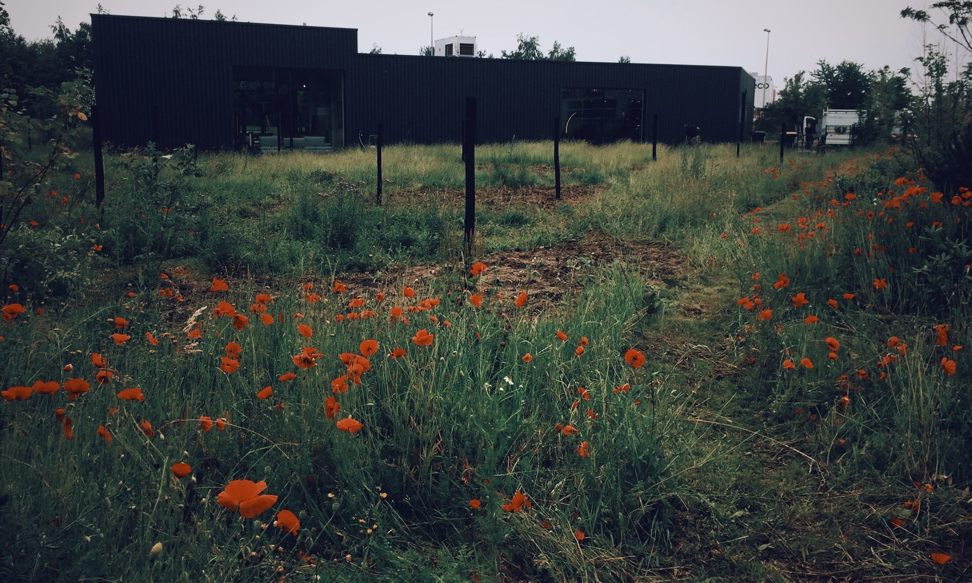 05_Nordscape_plantation-prairie-coquelicot-Rochebobois