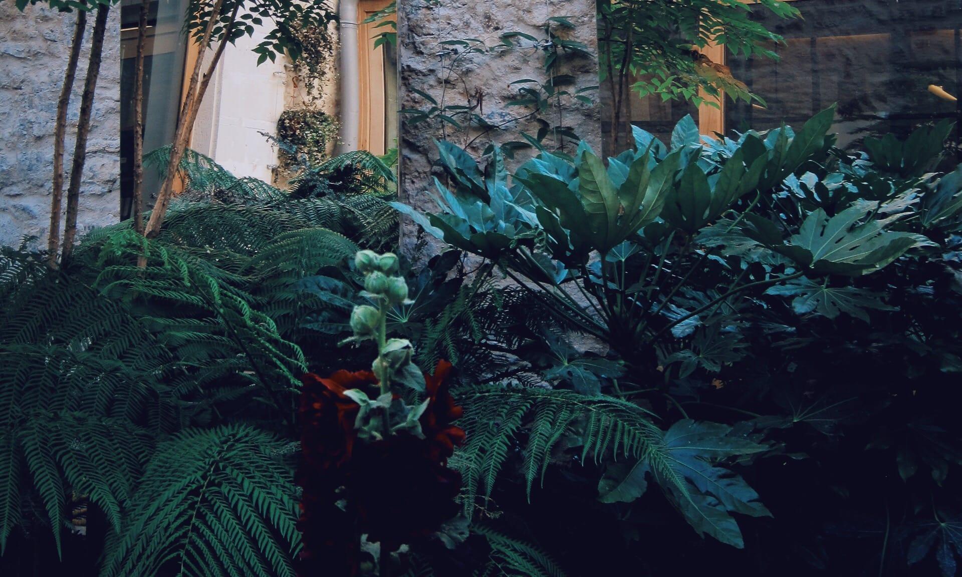 07_Nordscape_Patio-jardin-fougeres-miroirs